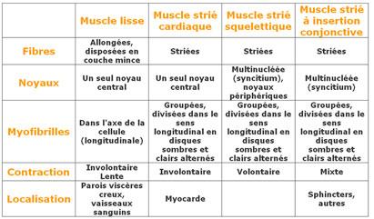 Tableau_muscle