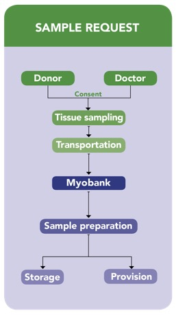 myology, paris, myobank